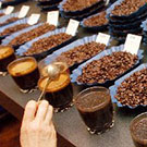 """lineup of various coffee beans"""