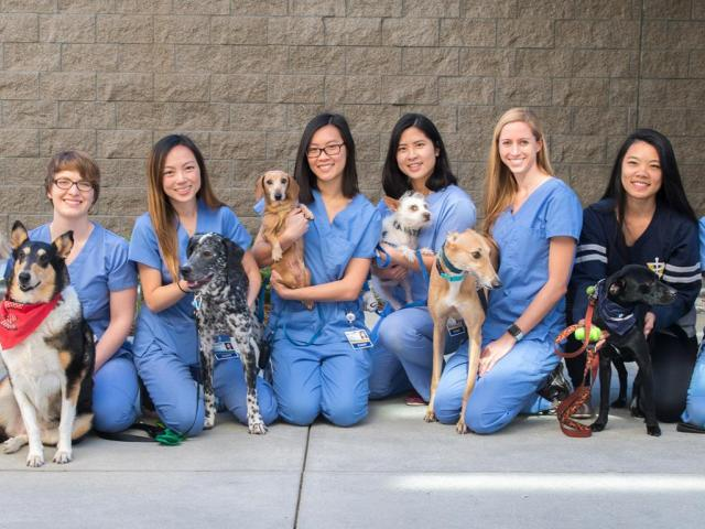 vet students group photo with dogs