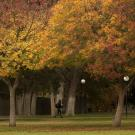 student walking near mrak hall, trees in fall colors